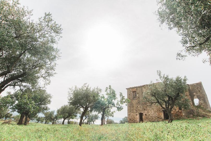 lamezia-terme-olive-grove