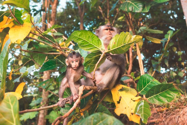 The Local Monkeys in Town- Photographer: Jellis Vaes