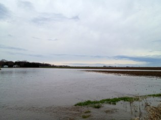 Completely submerged corn fields as far as you could see