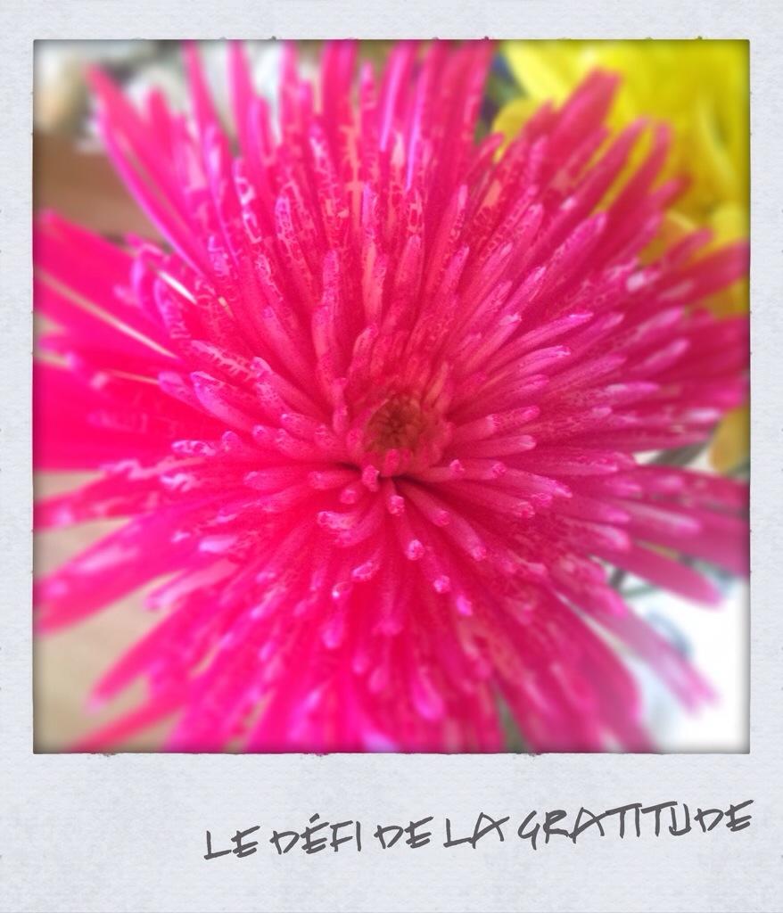 le défi de la gratitude blog zen vie alternative marie-Eve Boudreault auteure