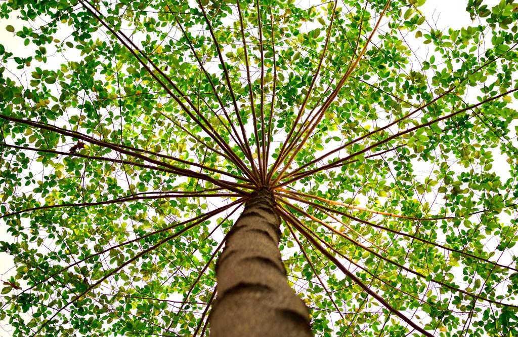 Famille verte 101: Comment être une famille verte, Ressource parentale Je Materne