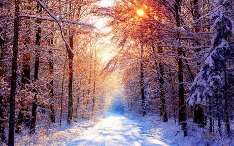 promenade en forêt en hiver