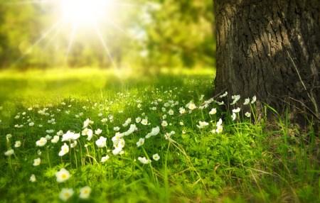 printemps dans la clairière