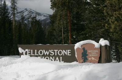 Yellowstone National Park & Reading Challenge Update