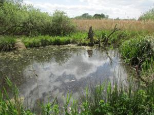 Blackwater Carr environment