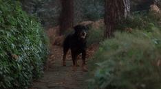 #FridayFlash Fiction   Spooky Tales 1: Black Dog