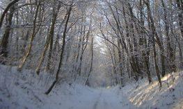 Winter on Marriott's way