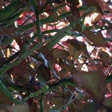 crowded foliage
