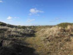 through some dunes
