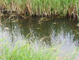 spot the Norfolk Chaser (use the reflections)
