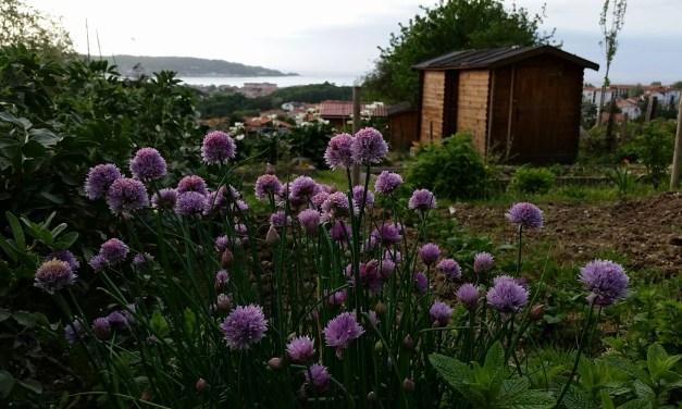 Fete des Jardins, Hendaye