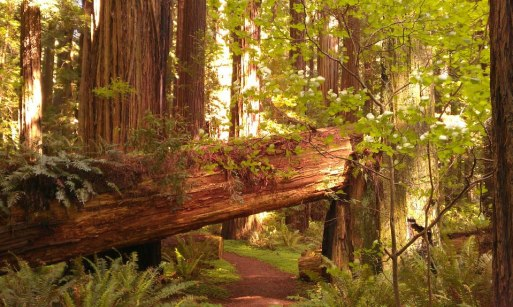 Grizzly Creek Redwoods State Park, California, USA (Endor, Speeder bike pursuit) - 40°29' N, 123°54' O