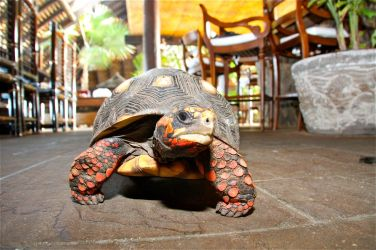 necker--more-species-than-any-other-island-on-earth-12651