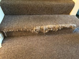 Carpet Repairs Melbourne 1300 887 131 Professional Carpet | Fixing Carpet On Stairs | Wood | Staircase | Runner | Stair Nosing | Install