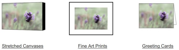 Lovely Lavender on Fine Art America