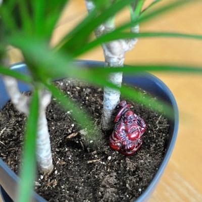 Plant Lady II