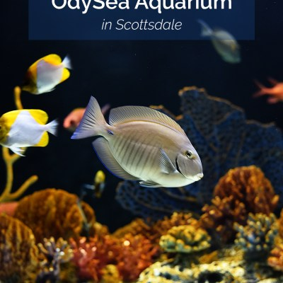 Arizona Adventures: OdySea Aquarium in Scottsdale