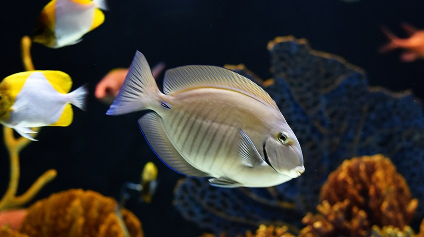 Guide to visiting the OdySea Aquarium in Scottsdale Arizona (with kids!)