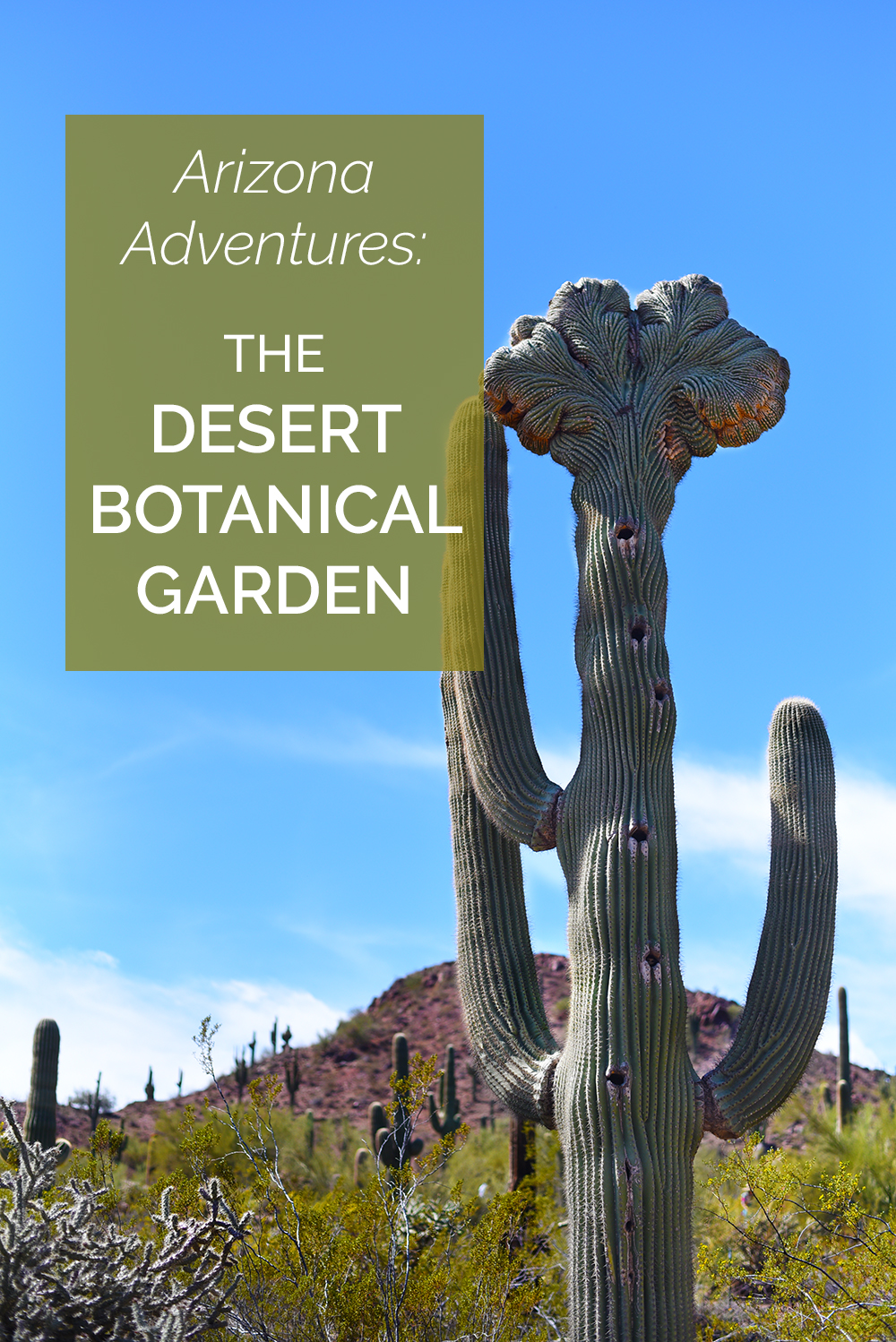 Tips for visiting the Desert Botanical Garden in Phoenix, Arizona