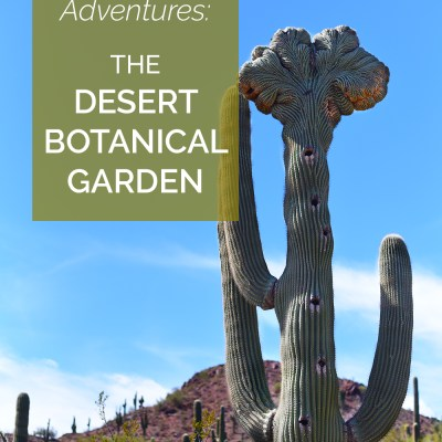 Arizona Adventures: The Desert Botanical Garden