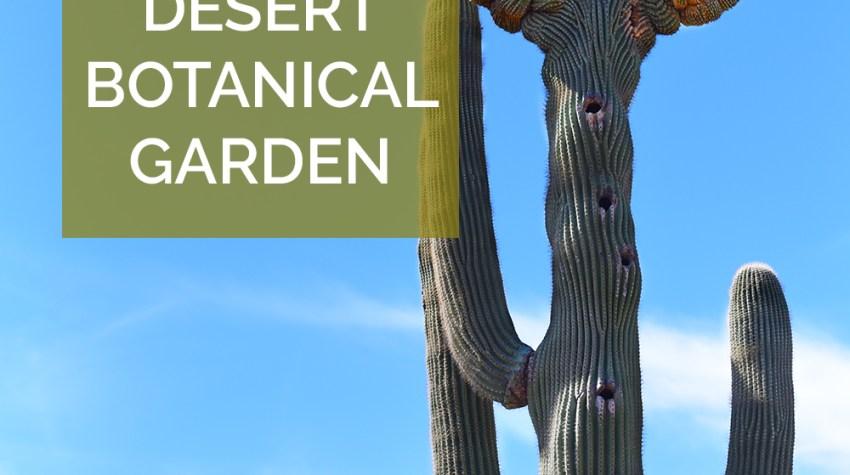 Tips for visiting the Desert Botanical Garden in Phoenix, Arizona