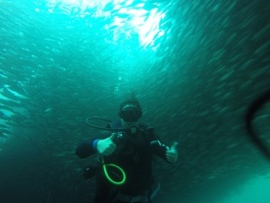 Surrounded by fish