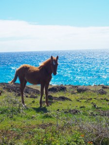 One of the many wild horses