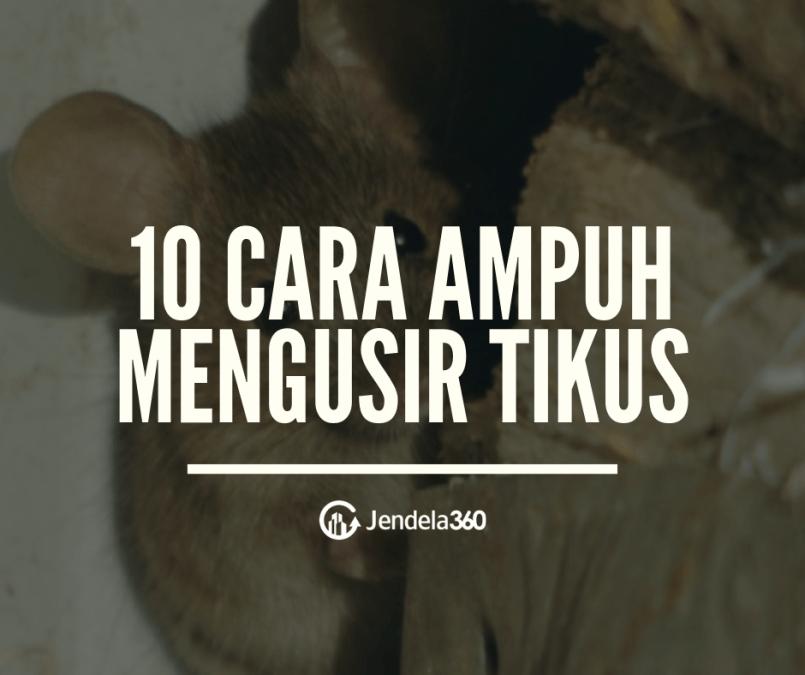 10 Cara Mengusir Tikus dari Hunian Anda Dengan Ampuh