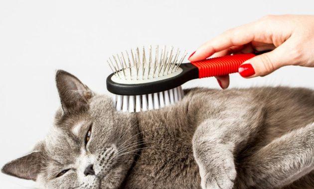 mencegah bulu kucing rontok