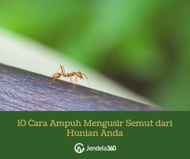 10 Cara Ampuh Mengusir Semut dari Hunian Anda