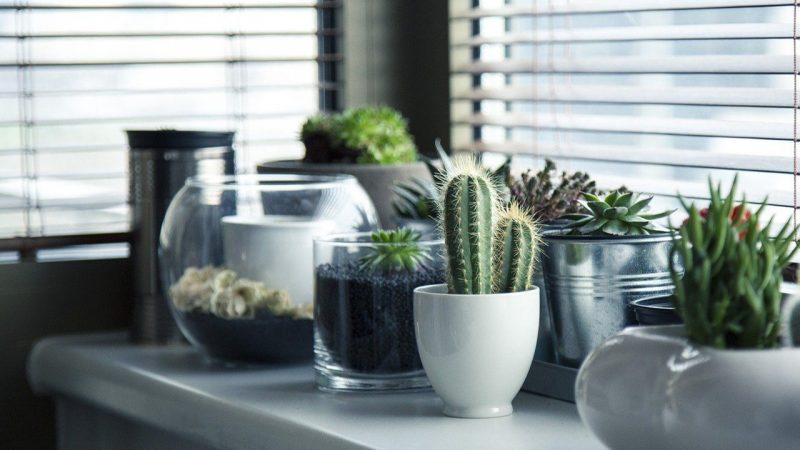 tumbuhan xerofit