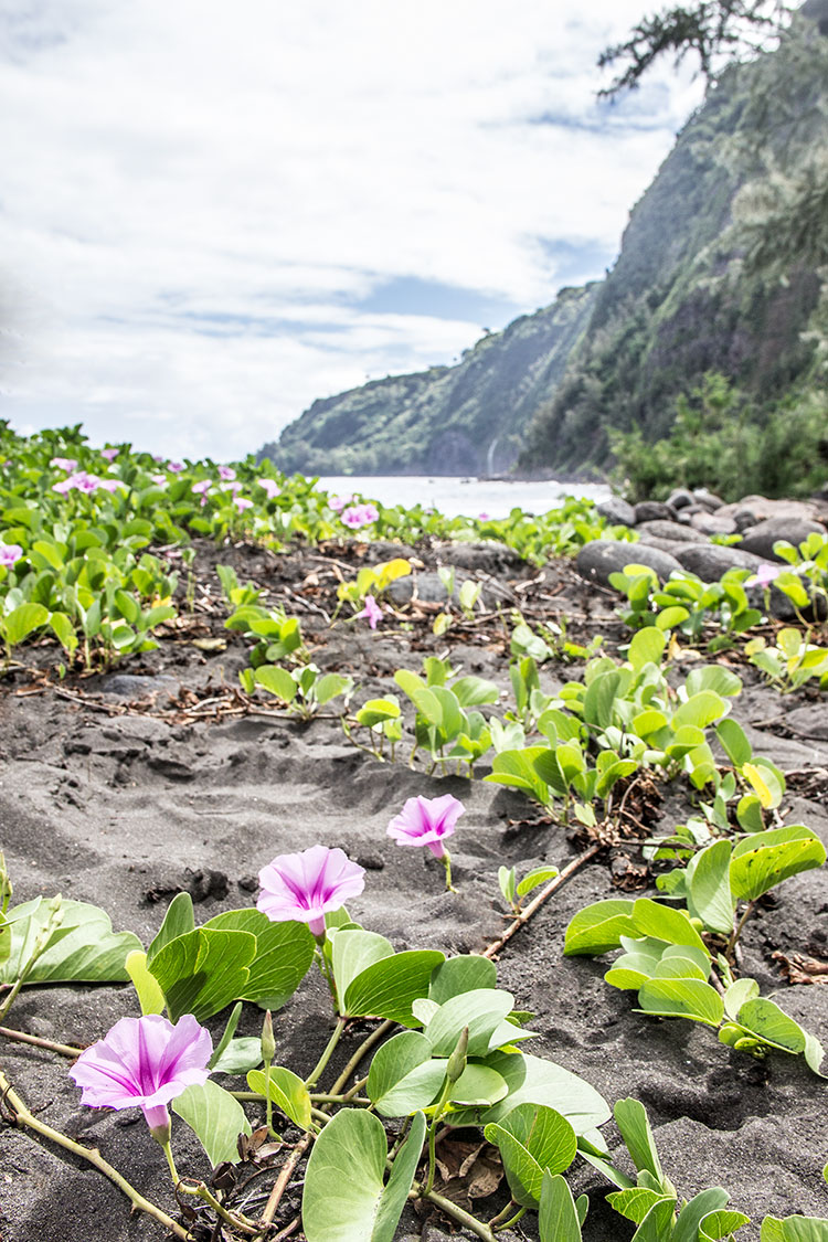 Flowers-of-Waipio-Valley