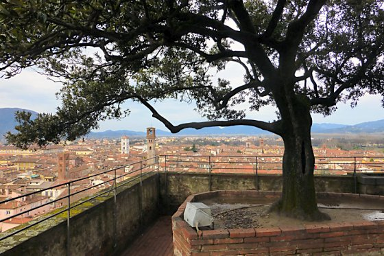 The view of Lucca from tree-topped Torre dei Guinigi.