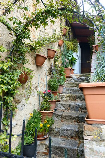 Stairs with pots of flowers and greenery on every step.