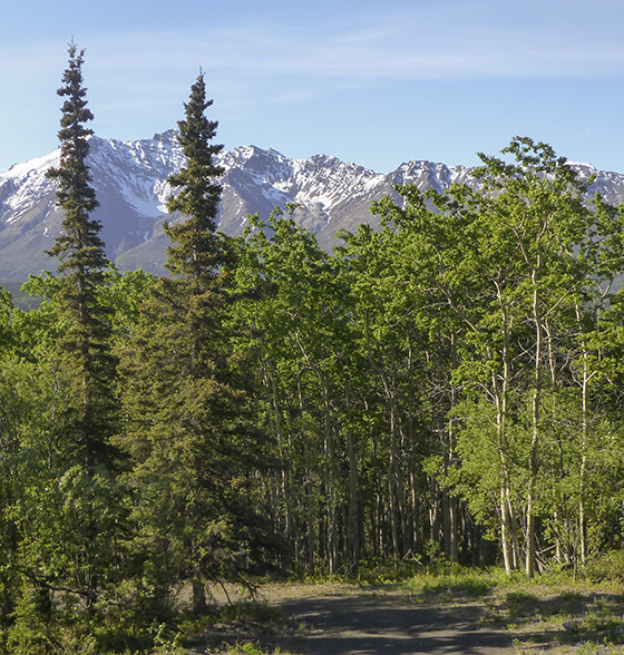 Aspens, mountains, and snow.