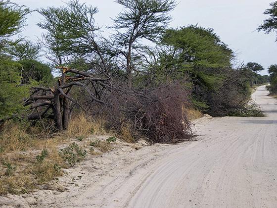 Broken trees in the road.