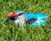 Woodland kingfisher resting on the ground.