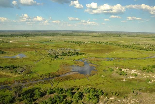 A palm-tree island in the Okavango Delta.