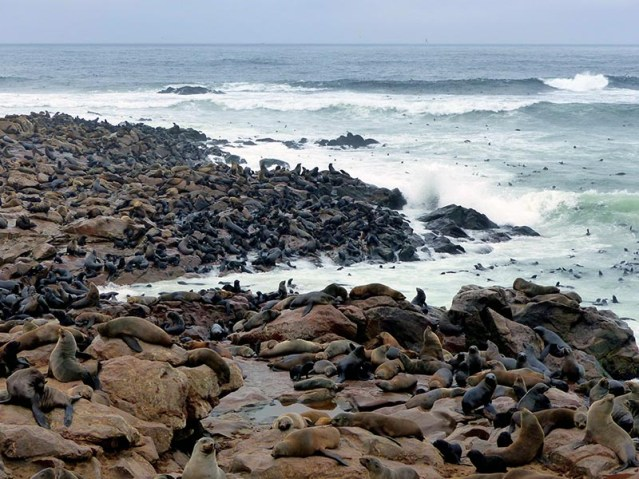 Fur seals at Cape Cross