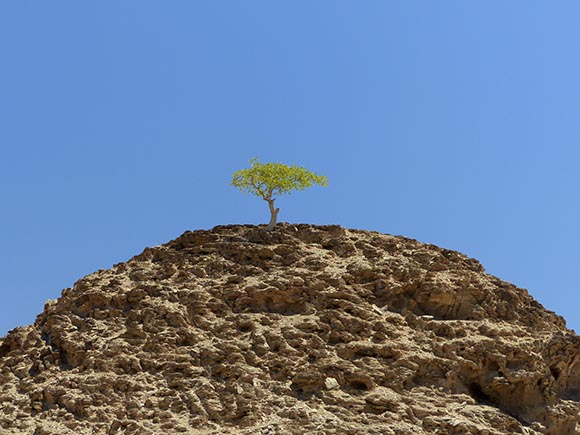 03 Tree on a Hill, Sesfontein, Namibia