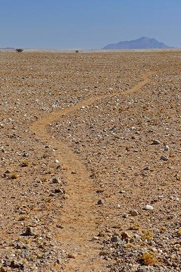 Desert Trail, Namib-Naukluft National Park