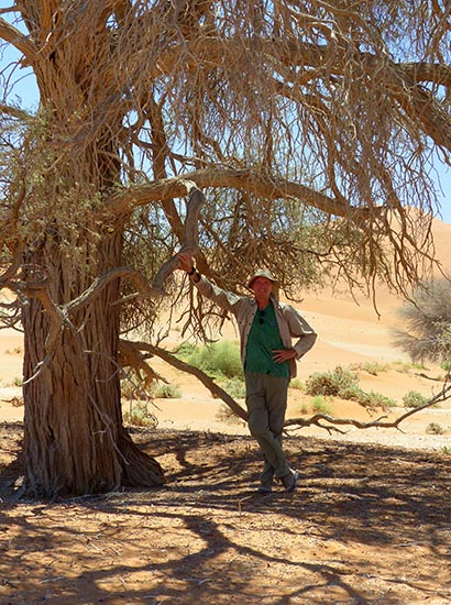 Mike's Shade, Namib-Naukluft National Park