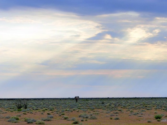 Elephant on the open plain, Etosha National Park