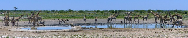 Man-made and natural waterhole, Etosha National Park