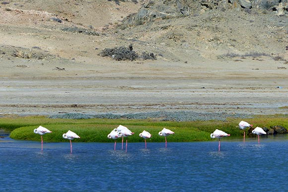 Flamingos sleep in Luderitz, Namibia