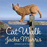 Cat Walk, by Jackie Morris