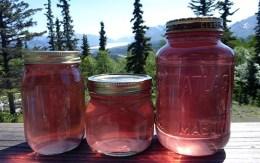 Wild rose petal syrup