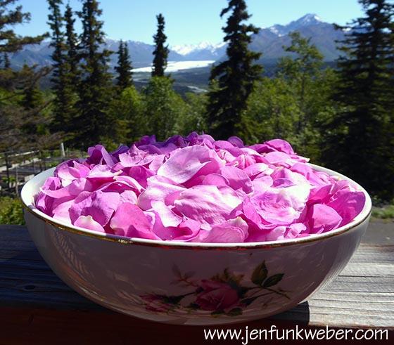 Wild Prickly Rose Petals