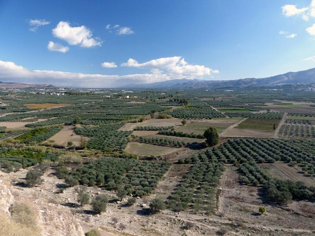 Olive trees on Crete, Greece - Jen Funk Weber