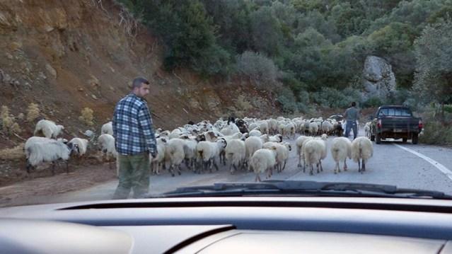 Greek shepherd dudes, Crete - Jen Funk Weber
